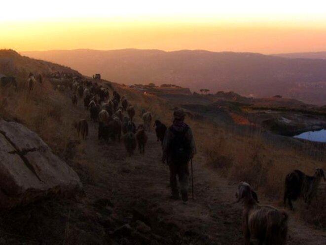 Retour du troupeau le soir © Siexte CALAMA