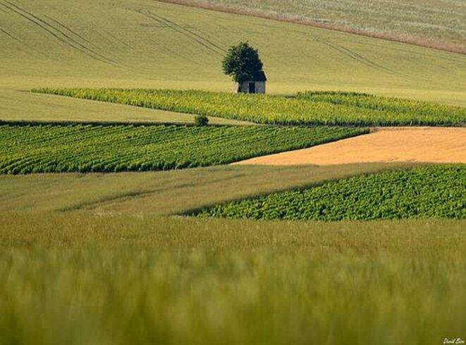Paysage auxerrois © David Bise (http://www.ipernity.com/doc/davnad/11609234)
