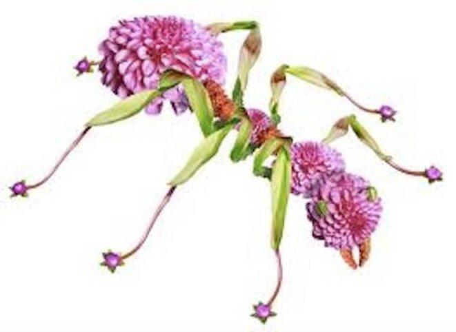 fourmi-fleur