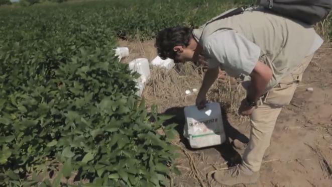 Paul Moreira dans un champ de soja GM en Argentine