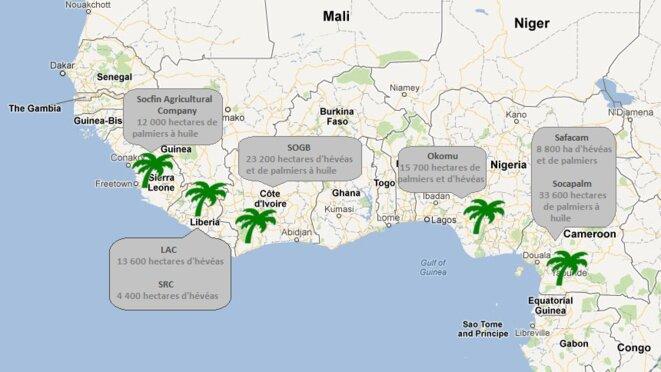 Les plantations de Bolloré en Afrique
