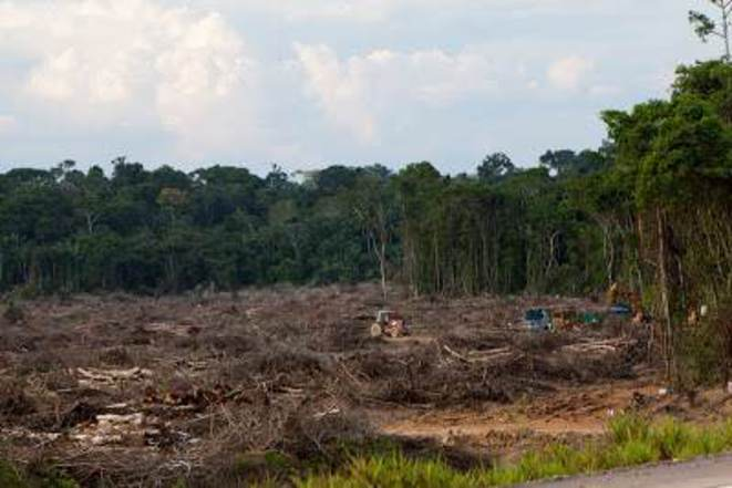 Déforestation sur des zones condamnées à être immergées par l'usine de GDF Suez/Jirau © Marcelo Min