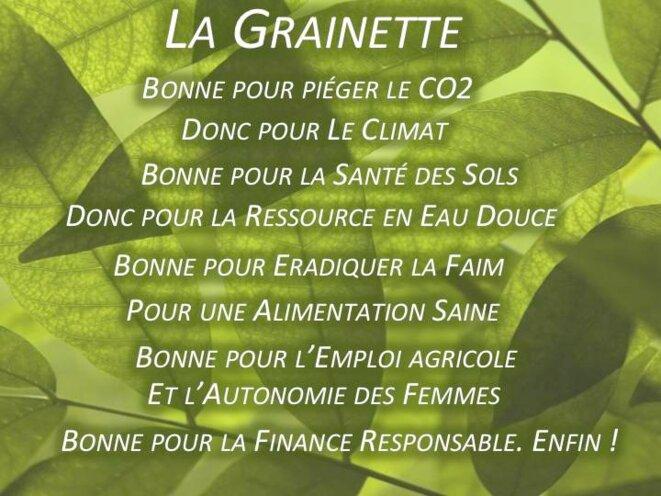 Les multiples bienfaits de la Grainette... © Hélène Nivoix