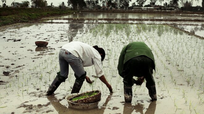 Photo du film - repiquage du riz