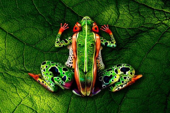 "Body Painting ""frog"" by johannes-stoetter © johannes-stoetter"