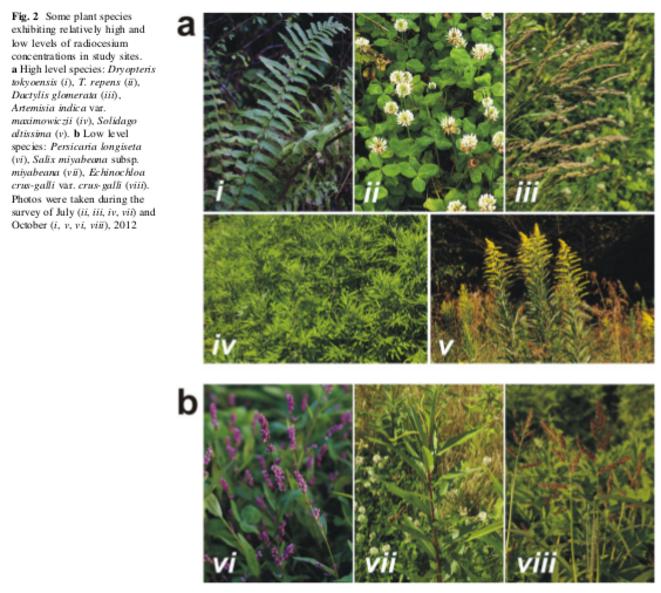 Quelques espèces récoltées parmi les 99 autres. © Institute of Plant Science and Resources, Okayama University