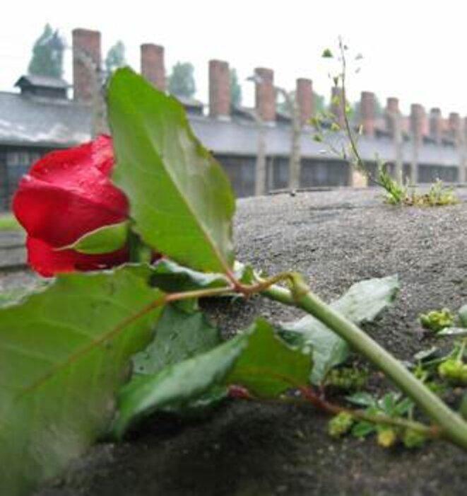 Auschwitz - hope after terror. © (c) C. Puisney / Wiki C.