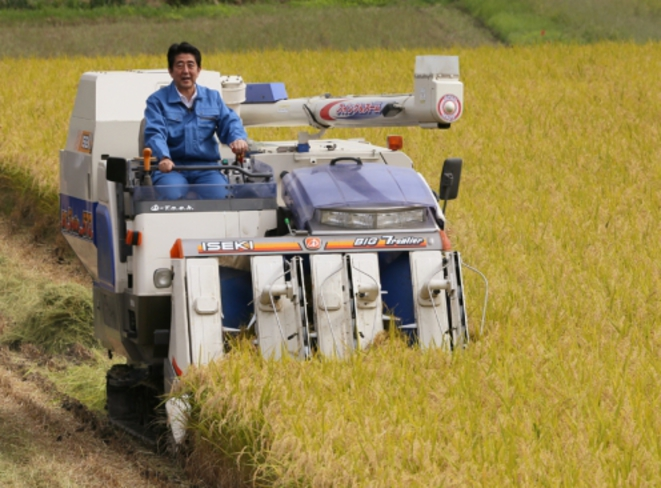 Le premier ministre Shinzo Abe participe à une récolte de riz dans la province de Fukushima, en septembre 2014.
