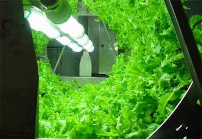 Hydroponie une solution envisageable pour nourrir l humanit en 2050 le club de mediapart - Chambre de culture hydroponique ...