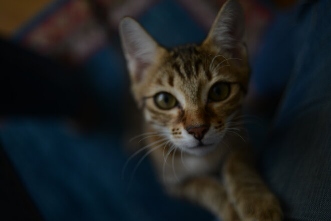 Nom d'un chat © fabienne siegwart