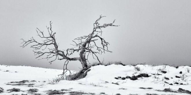 Ô solitude © Alfred Blaess