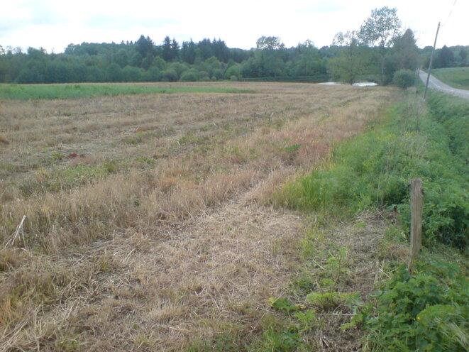 Epandage d'herbicide chimique à proximité de la Charente sur le PNR Périgord-Limousin © Photo JC Mathias