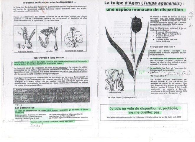 La Tulipe d'Agen (Tulipa Agenensis): une espèce menacée de disparition © Hervé CASTAGNE et Frédéric BLANCHARD
