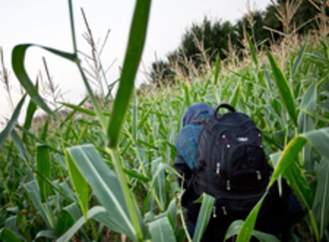 A travers les champs de maïs © Valerio Muscella