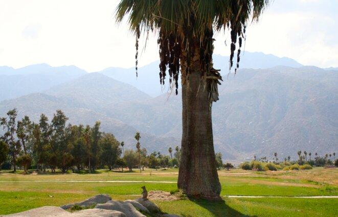 Un golf à Palm Springs, dans le désert.