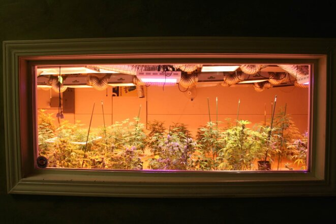 Dans le 3D Cannabis Center, à Denver.