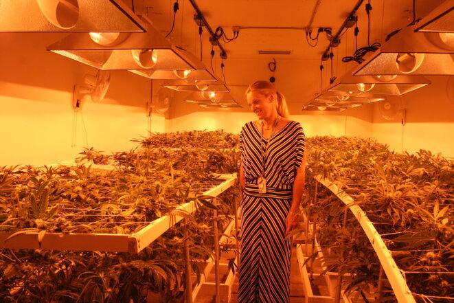 Toni Fox, à la tête du 3D Cannabis Center.