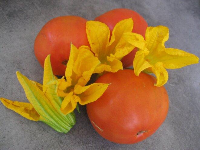 tomates et fleurs de courgettes  © elisa