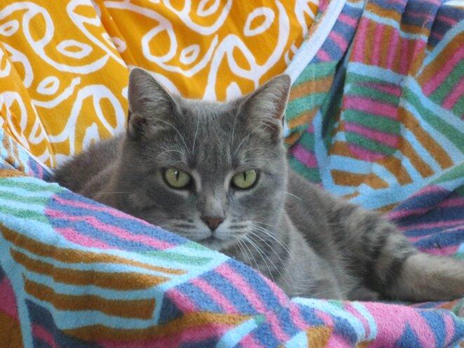 Pupuce dans son fauteuil © elisa