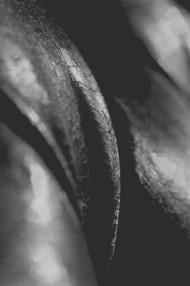 © Jean-David Moreau