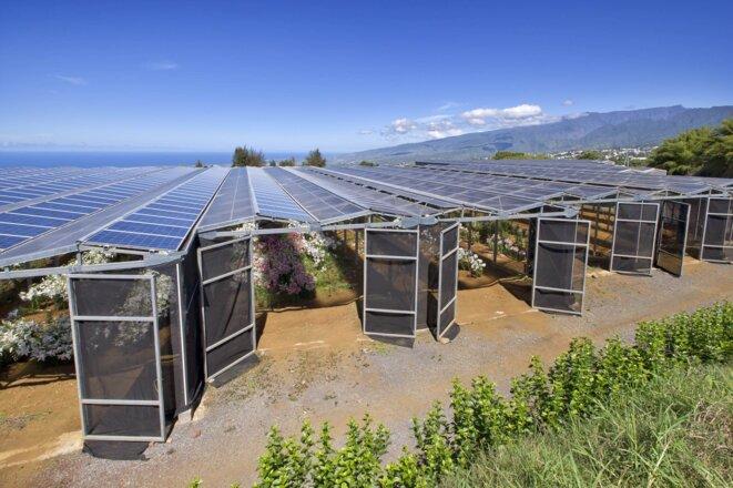 Culture florale sous serre photovoltaïque, à La Réunion. © Steve Arcelin a.b.s. A.-L. Porcher, Akuo Energy et Agriterra.