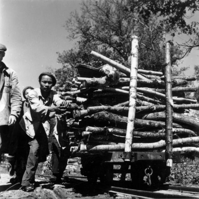 Travailleurs indochinois dans des travaux de forestage, vers 1943. © Pham Van Nhân