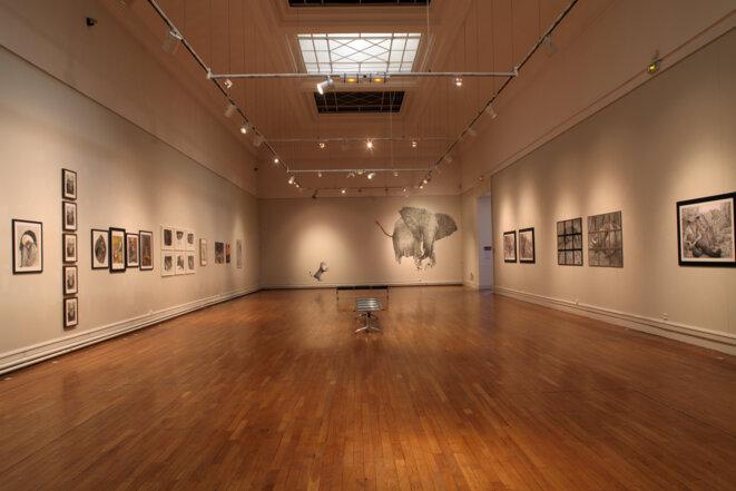"""exposition au Musée d'art de Toulon """"la vie est un zoo"""" dessins de Patrick Sirot du 5 avril au 4 août. © Dessins Patrick Sirot"""