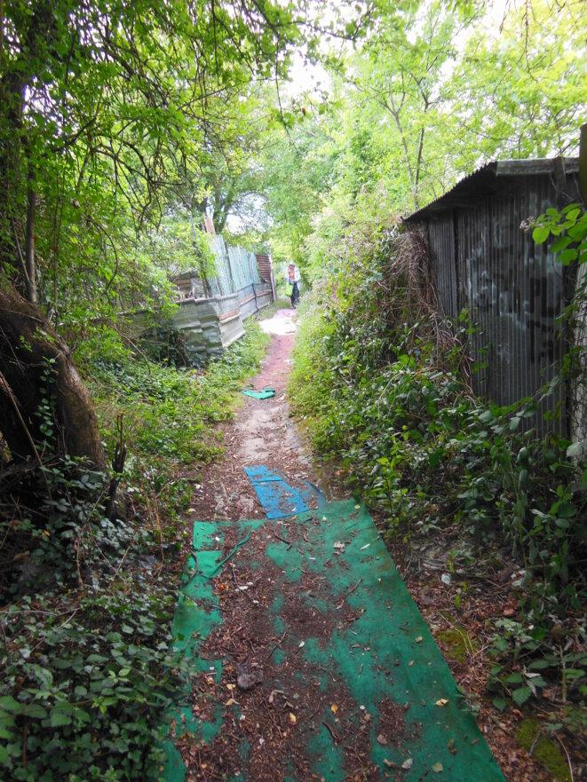 Des friches à Champigny: côté jardins (Partie 1/2)