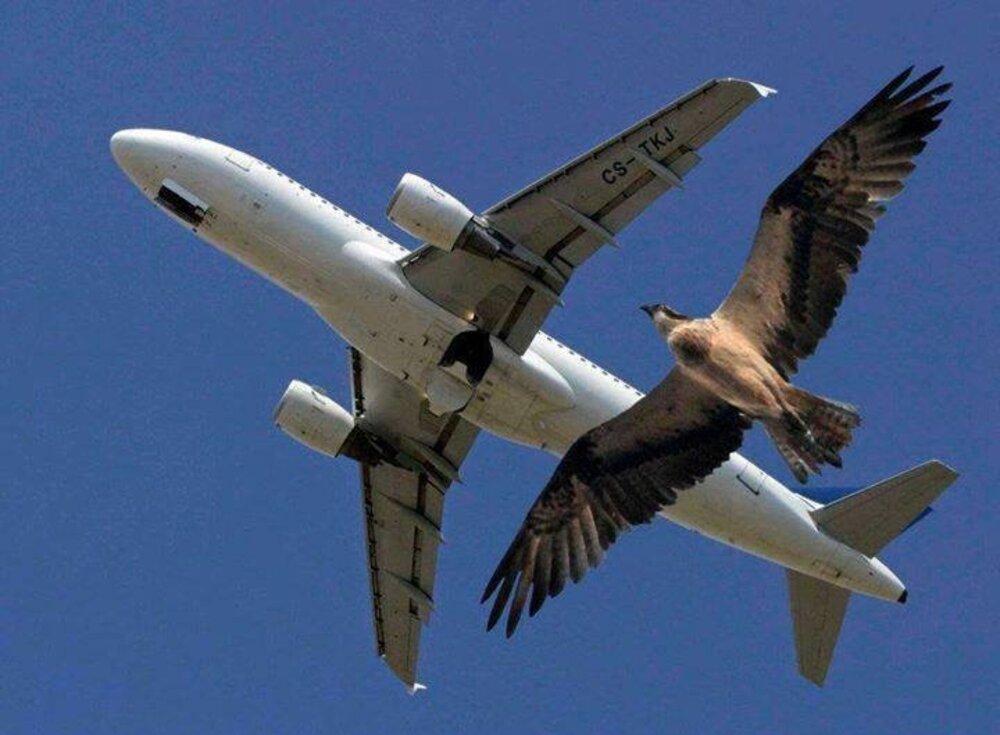 Qui a dit que l 39 avion est le f minin de l 39 oiseau le club de mediapart - Que peut on emmener en avion ...