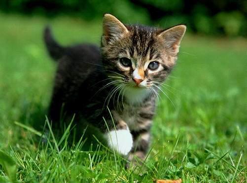 Le chat de villejean