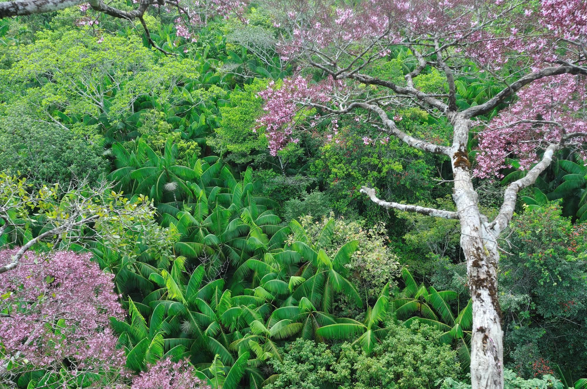 Vue de la forêt, des arbres Couratari, sur le site du permis