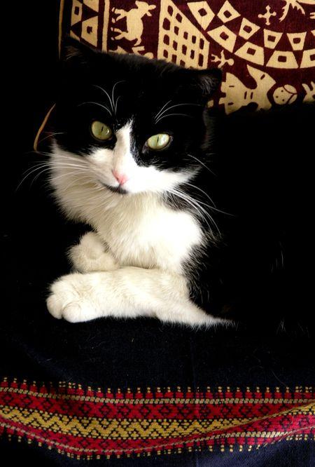 Le chat Tofort contemple le monde