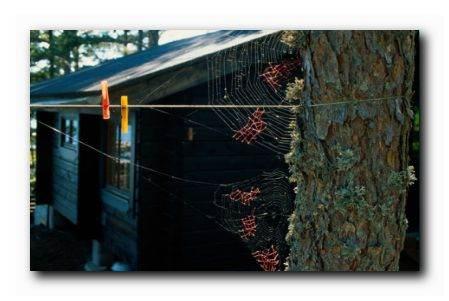 Mended-Spiderweb-19-Laundrya.jpg