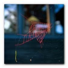 Mended-Spiderweb-8-Fish-Pa_0.jpg