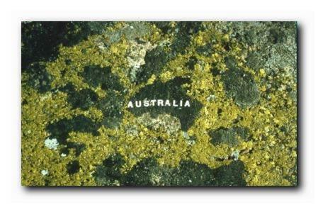 Moss-Maps-Australiaa.jpg
