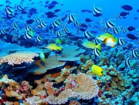 les-coraux-de-polynesie